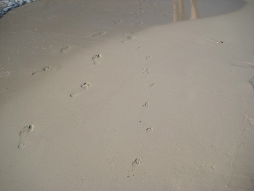 Family_footprints