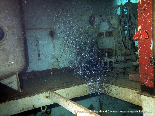 10-12-12_-_trinity_caves_kittiwake-014