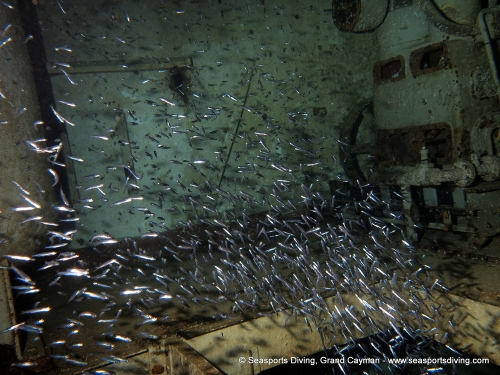 10-12-12_-_trinity_caves_kittiwake-015