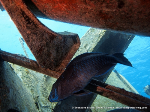 10-12-12_-_trinity_caves_kittiwake-032